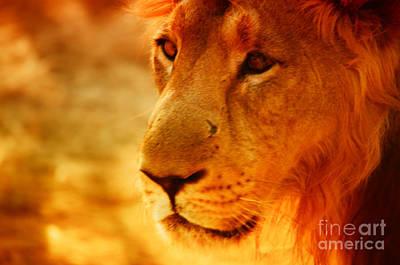 Lion The King Art Print