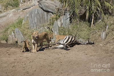 Lioness And Cubs Over Fresh Kill Art Print by Darcy Michaelchuk