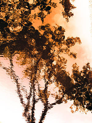 Ripples Photograph - Liquid Tree by Hakon Soreide