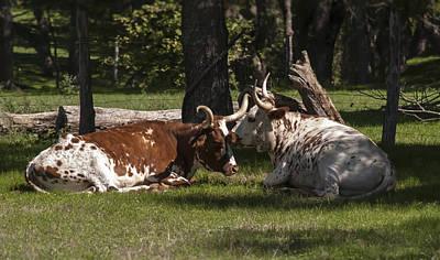 Cattle Photograph - Listen Listen by Kelly Rader