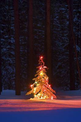 Lit Christmas Tree In A Forest Art Print by Carson Ganci