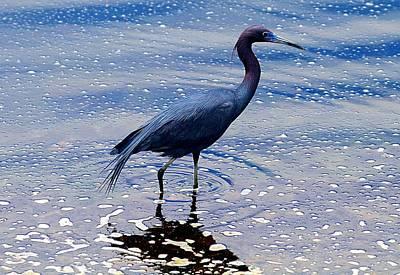 Photograph - Lit'l Blue by Elizabeth Winter