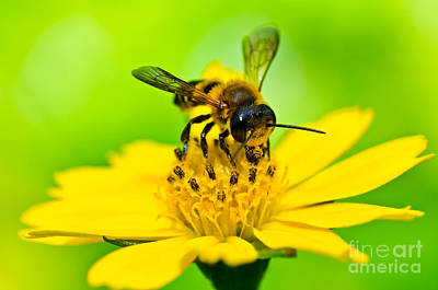 Little Bee In Yellow Flower Art Print by Peerasith Chaisanit