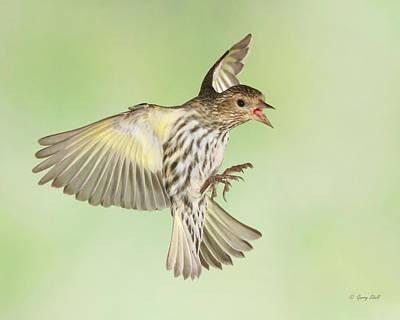 Photograph - Little Bird Complex by Gerry Sibell