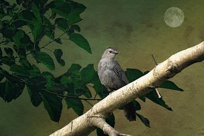 Little Bird Art Print by Tom York Images