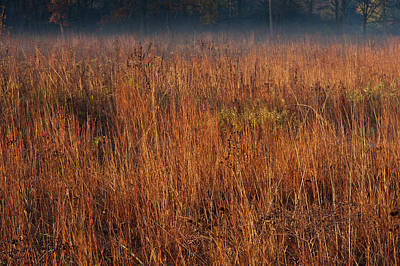 Little Bluestem Grasses On The Prairie Original