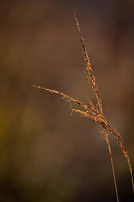 Little Bluestem On The Prairie Original