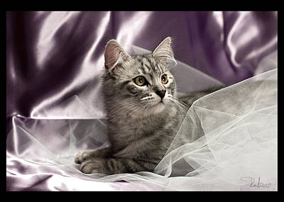 Photograph - Little Cat On Lilac   Card by Raffaella Lunelli