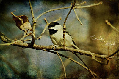 Photograph - Little Chickadee by Lana Trussell
