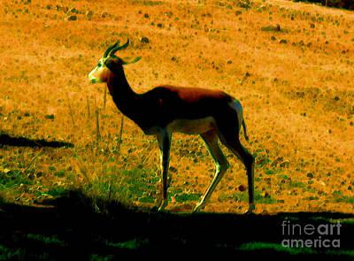 Painting - Little Deer by Elinor Mavor