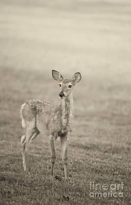 Photograph - Little Fawn by Cheryl Davis