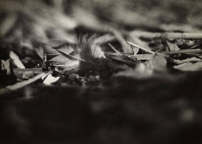 Photograph - Little Feather Lost by Rebecca Sherman