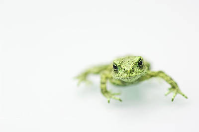 Little Frog Print by Erik van Hannen