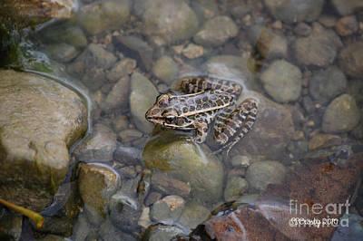Edward Hopper - Little Frog by Susan Stevens Crosby