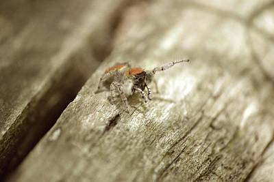 Photograph - Little Jumper In Sepia by JD Grimes