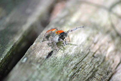 Photograph - Little Jumper by JD Grimes
