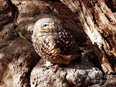 Desert Digital Art - Little Owl 1 by Methune Hively