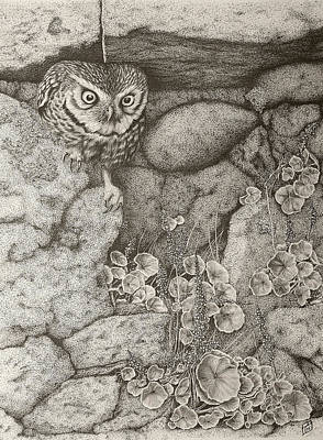 Ballpoint Drawing - Little Owl by Paul Parsons