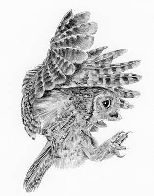 Burrowing Drawing - 'little Owl' by Sue  Miles