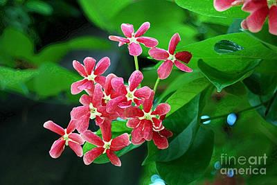 Digital Art - Little Pink Chinese Honeysuckle Flowers  by Eva Kaufman