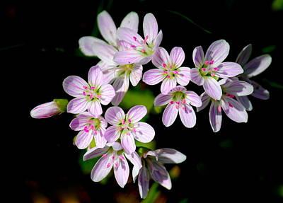 Flower Photograph - Little Pinks by Rosanne Jordan