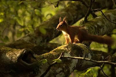 Photograph - Little Red by Gavin Macrae