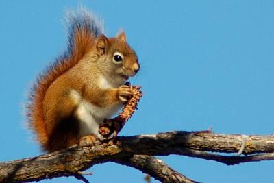 Photograph - Little Squirrel by Dakota Light Photography By Dakota