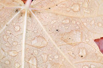 Photograph - Little Wet Leaf by Margaret Pitcher