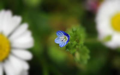 Little Wild Flower Original