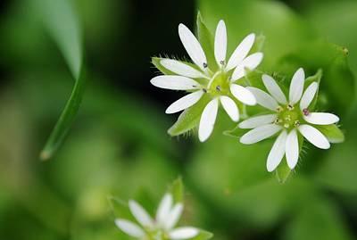 Little Wild Flowers Original