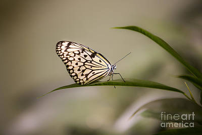 Leda.com Photograph - Little Zebra by Leslie Leda