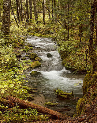 Photograph - Little Zig Zag Stream by Wes and Dotty Weber
