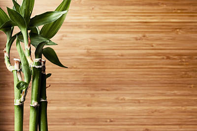 Y120831 Photograph - Live Bamboo Plant And Bamboo Board Background by Jill Fromer