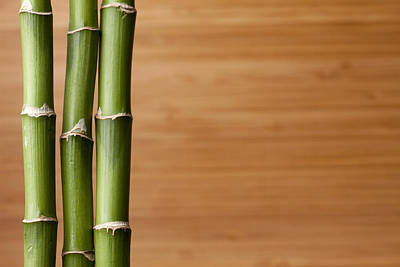 Y120831 Photograph - Live Bambooplant On Bamboo Board Background by Jill Fromer