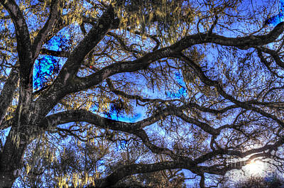 Photograph - Live Oak Branches 3 by Morgan Wright