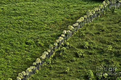 Impressionism Photos - Living Fence by Heiko Koehrer-Wagner