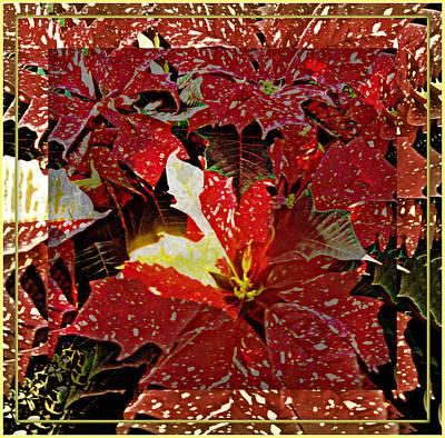 Living Light Of Poinsettias  Art Print by Mindy Newman
