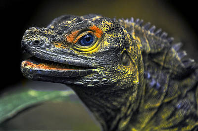 Dragon Photograph - Lizard  by Alessandro Matarazzo