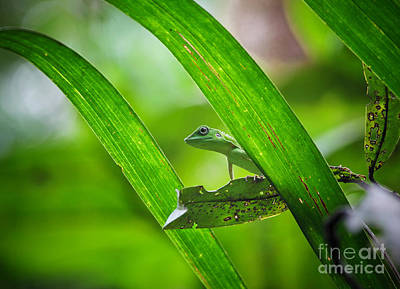 Photograph - Lizard by Gualtiero Boffi