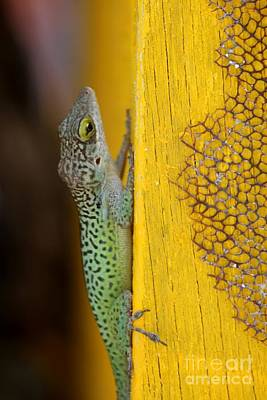 Lizard Original by Sophie Vigneault