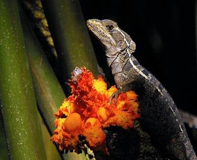 Photograph - Lizard Time Out From A Flower Dinner by William OBrien