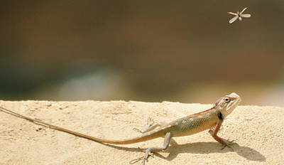 Lizards Art Print by Shahzeb Nasir