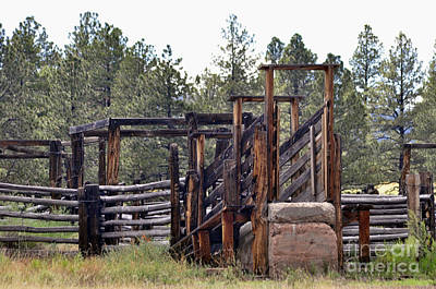 Cattle Chute Photograph - Loading Day by Juls Adams