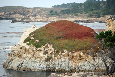 Photograph - Lobos Rock by Harvey Barrison