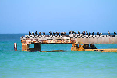 Cormorants Photograph - Local Hangout by Betsy Knapp
