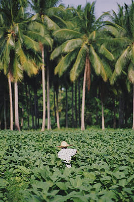 Local Man Spraying Tobacco Crop Art Print by Axiom Photographic