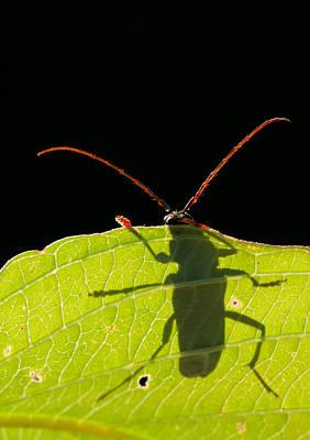 Locust Borer Art Print by Mircea Costina Photography