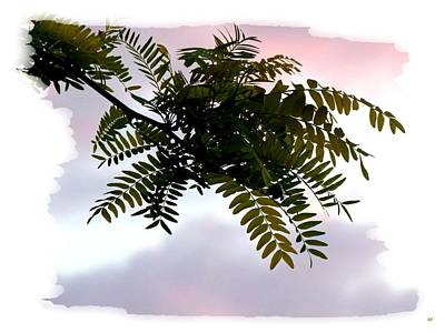 Locust Sunset Photograph - Locust Branch by Will Borden