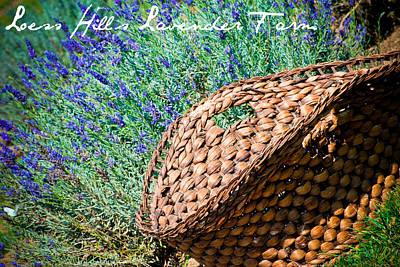 Loess Hills Lavender Art Print by Elizabeth Gingerich