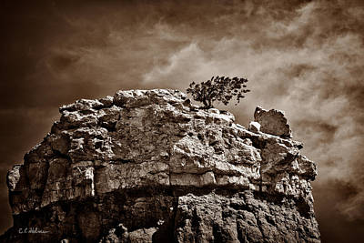 Photograph - Lofty Solitude - Sepia by Christopher Holmes